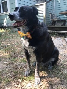 Cooper Young Festival - New Dog Bow Ties!