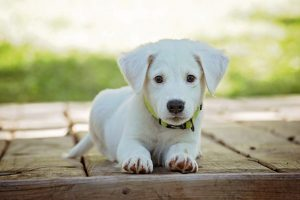 Upcoming Dog-Friendly Events in Memphis