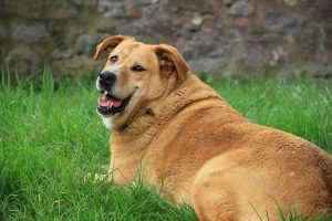 Picking the Right Breed for Your Lifestyle