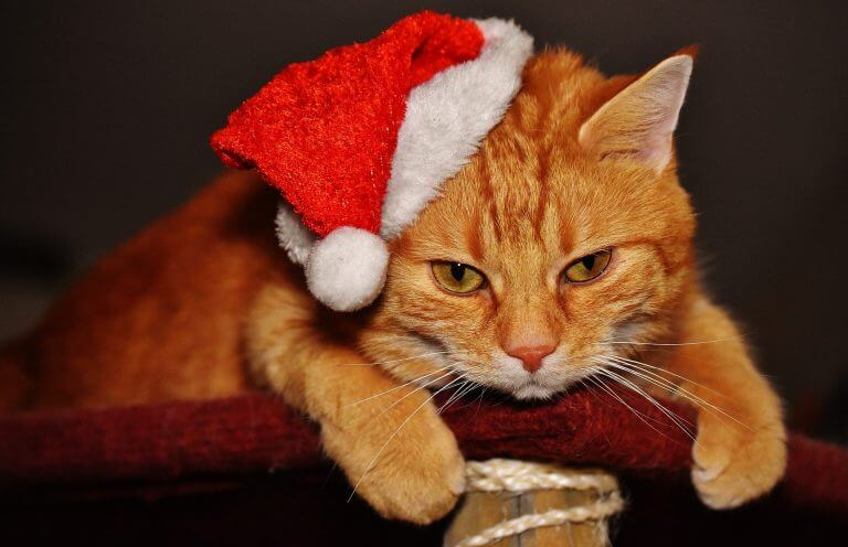 How to Celebrate your Furry Friends this Christmas